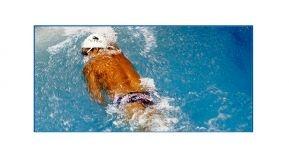 Jornadas profesionales del Salón Internacional de la piscina